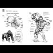 Desenhando Anatomia Animais